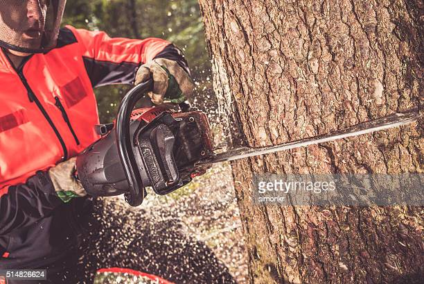 Homme coupe un arbre