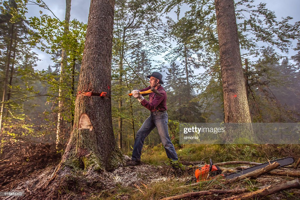 Tractor Man On Cutting Trees : Homme coupe un arbre photo getty images