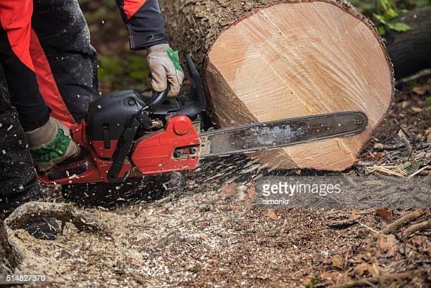 Homme avant tronc d'arbre