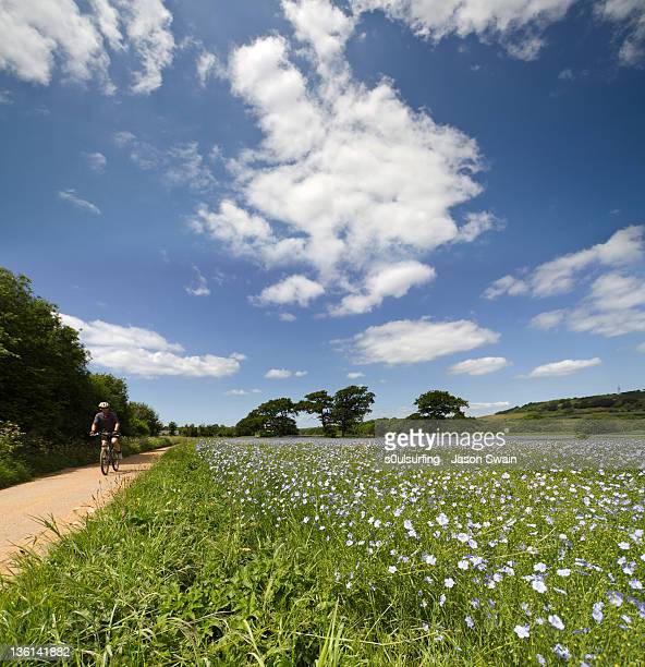 man cycling on path - s0ulsurfing stock pictures, royalty-free photos & images