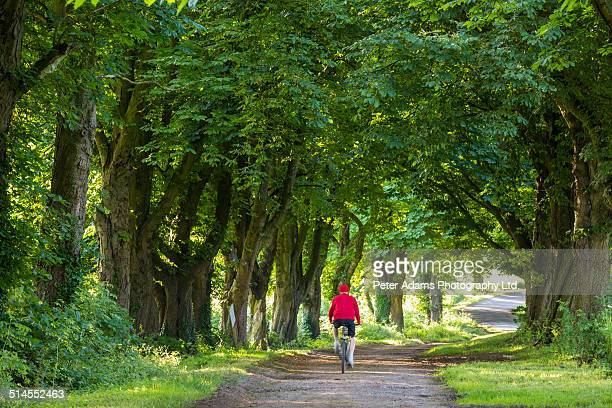 man cycling through avenue of green trees, england - avenue stock pictures, royalty-free photos & images