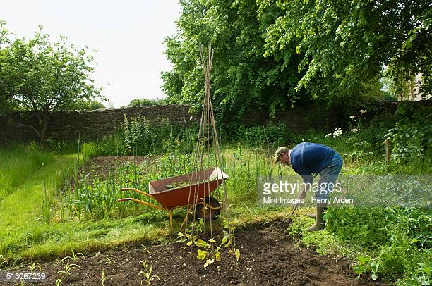 A man digging his vegetable garden, and planting young plants.