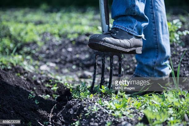 Man digging with pitchfork, Bavaria, Germany