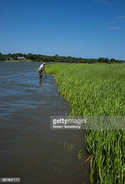 A man digs for quahog clams with a metal rake at low tide in Town Cove of Orleans Massachusetts on July 14 2012 Quahogs are the predominant mollusk...