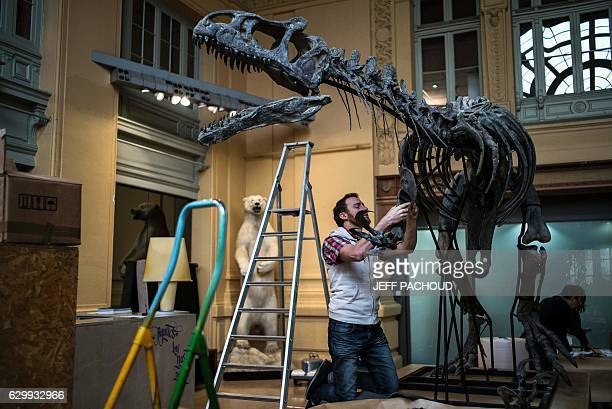 A man disassembles the skeleton of an Allosaurus on December 15 2016 at Lyon Brotteaux Aguttes auction house in Lyon Named 'Kan' the skeleton was...