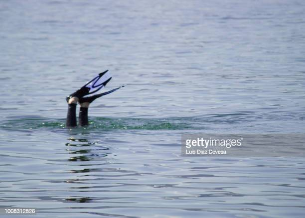 Man diving underwater in sea with fins up in the air