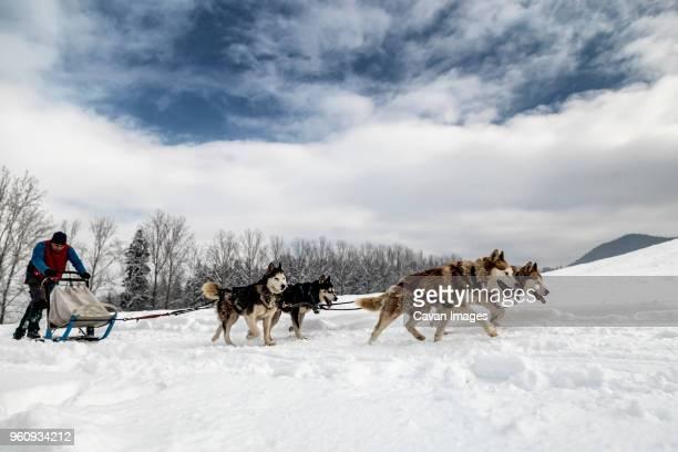 man dogsledding on snowy field against cloudy sky - dog sledding stock-fotos und bilder