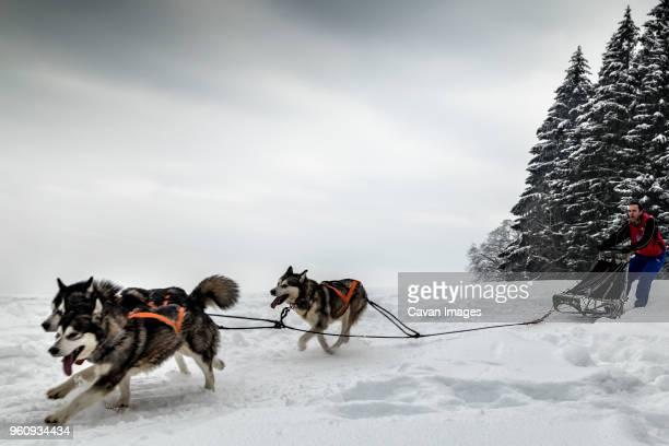 man dogsledding on snowy field against sky - シベリアンハスキー ストックフォトと画像