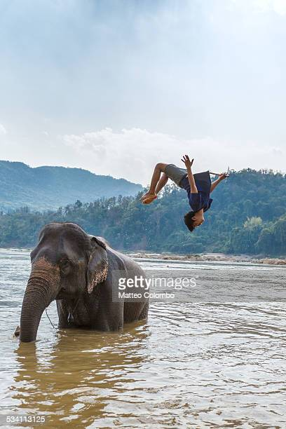 Man doing a back somersault from an elephant, Laos