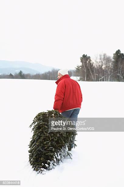 Man dragging a spruce tree