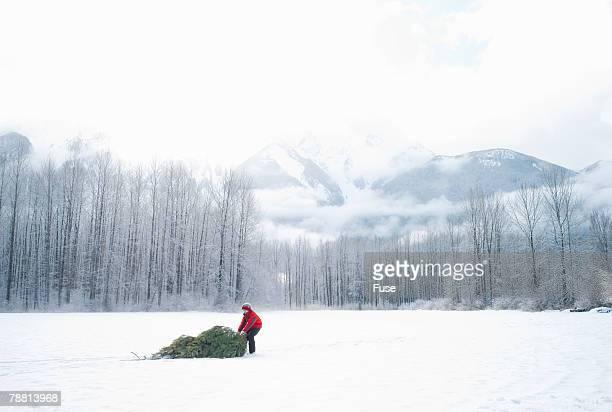 Man Dragging Christmas Tree