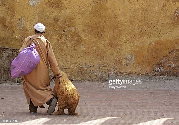 Man drags a rather reluctant goat across the square just outside the Medina, in Sefrou. Sefrou is a small town in Morocco, North of Fez. Just ahead...