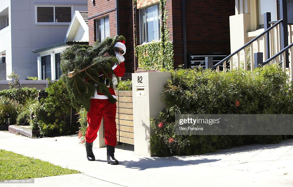 Man dressed as Santa Claus carrying christmas tree along street : Stock Photo