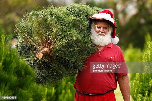 A man dressed as Santa Claus helps families choose their own trees at Sydney Christmas Tree Farm at Duffy's Forest on December 13 2014 in Sydney...