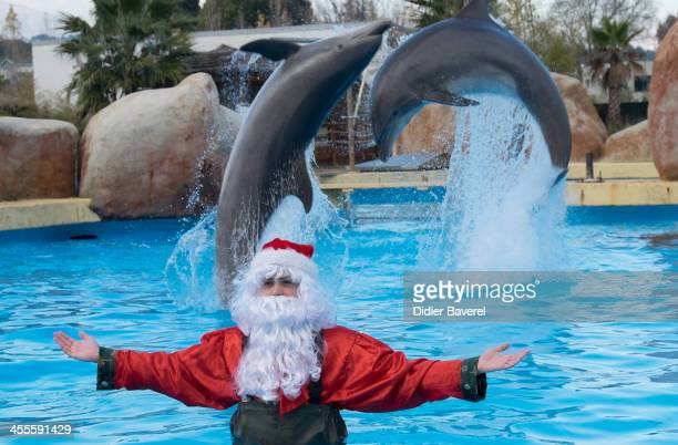 A man dressed as Santa Claus poses with dolphins at the Marineland Animal Exhibition Park on December 12 2013 in Antibes France