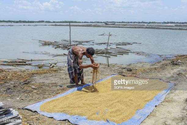 Man dries crops on the bank of river in the aftermath of the extremely severe cyclonic storm Amphan. Thousands of shrimp enclosures have been washed...