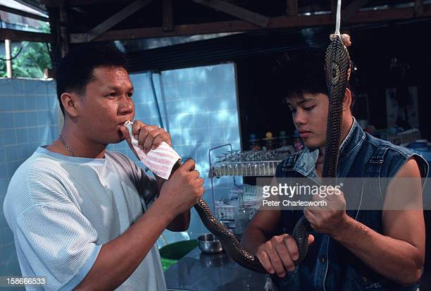 A man drinks the blood of a cobra snake directly from the serpent itself in a traditional Chinese medicine shop in Hat Yai Potions made from herbs...
