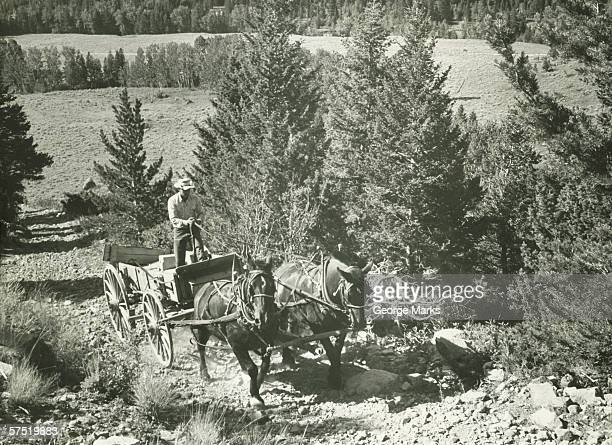 man driving horse-drawn vehicle on dirt-road, (b&w) - animal powered vehicle stock photos and pictures