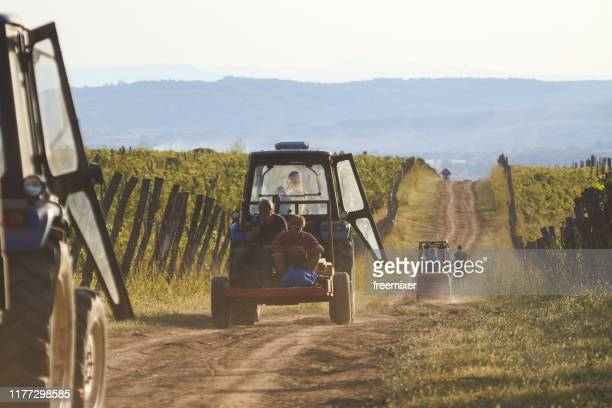 man driving tractor on dirt road among vineyards - grape harvest stock pictures, royalty-free photos & images