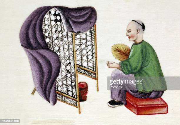Man drying silkworm cocoons over a charcoal pan surrounded by bamboo screen and using blanket and fan to regulate draught Chinese tempera painting on...