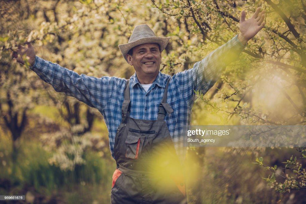 Mann im Obstgarten genießen : Stock-Foto