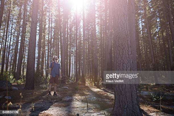 Man enjoyng the trees in the forrest
