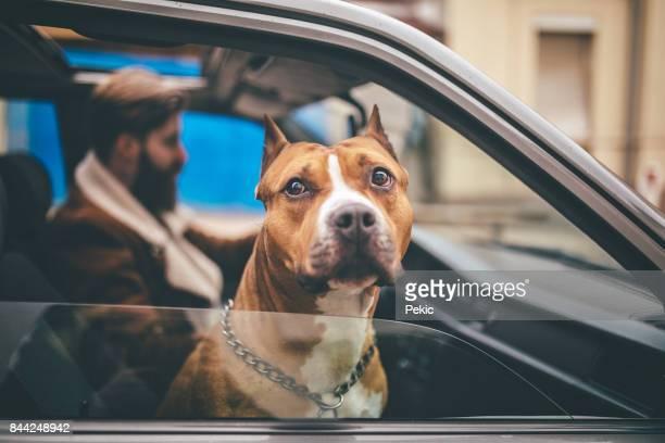 Man geniet van de rit naar huis zo veel als zijn hond