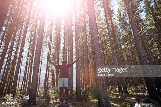 Man enyoing the sun & trees in the forrest