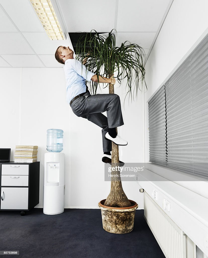 Man escaping the office via a palm tree. : Stockfoto
