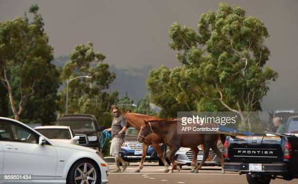A man evacuates horses as strong Santa Ana winds blow fire and smoke from the Canyon 2 Fire toward them on October 9 2017 in Orange California / AFP...