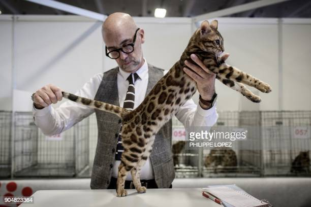 TOPSHOT A man evaluates a Bengal cat during the Paris Animal Show on January 14 2018 in Paris / AFP PHOTO / PHILIPPE LOPEZ