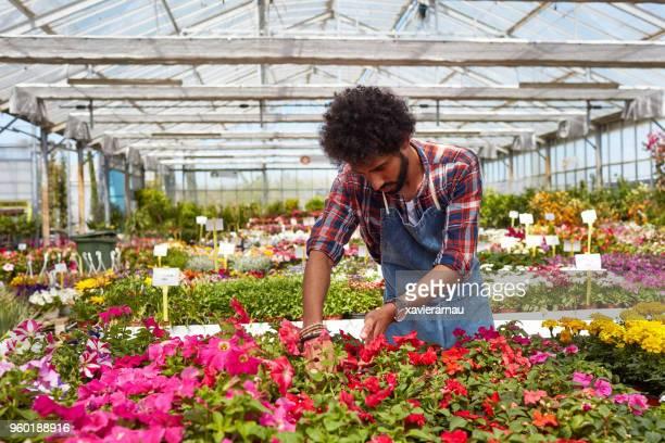 Man examining flower plants at garden center