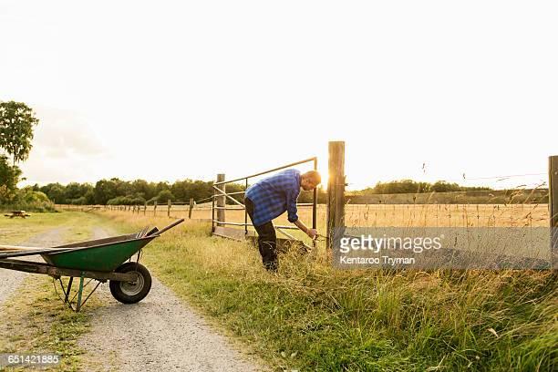 Man examining gate on grassy field against clear sky at farm