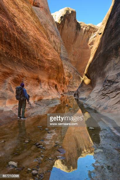 man exploring halls creek narrows in capitol reef national park - capitol reef national park stock pictures, royalty-free photos & images