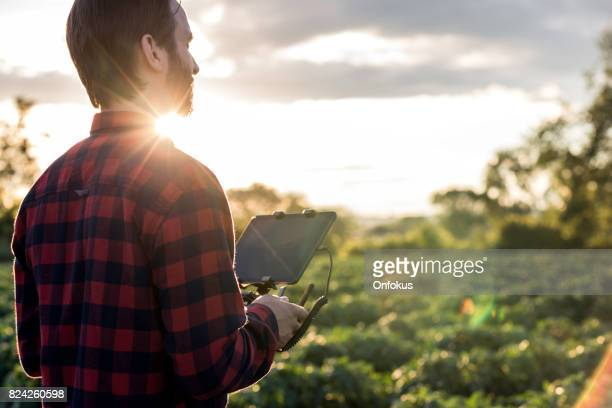 man farmer pilot using drone remote controller at sunset - agronomist stock pictures, royalty-free photos & images