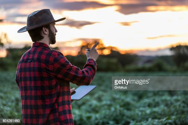 man farmer using digital tablet in field at sunset - agronomist stock pictures, royalty-free photos & images