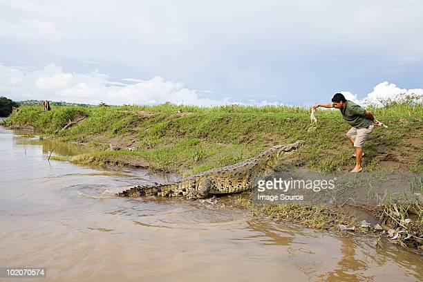 Man feeding a crocodile in costa rica
