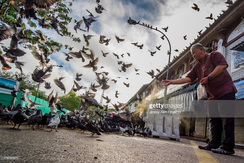 Man Feeding Bird While Standing On Road : Photo