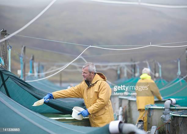 man feeding fish on scottish salmon hatchery - voeren stockfoto's en -beelden