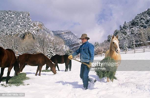 man feeding hay to horses in snowy field - コロラド州 ニューキャッスル ストックフォトと画像