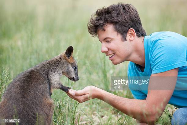man feeding wallaby in wildlife, outback australia - kangaroo stock pictures, royalty-free photos & images