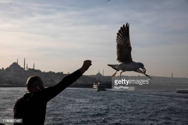 A man feeds a seagull during he sails in a ferry in Istanbul Turkey on Nowember 07 2019