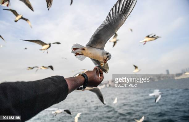 TOPSHOT A man feeds a seagull flying behind a ferry on The Bosphorus as the sun shines in Istanbul on January 4 2018 / AFP PHOTO / BULENT KILIC