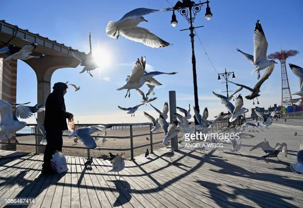 A man feeds a seagulls on the Coney Island Boardwalk on a cold winter day in New York on January 22 2019 The hight temperature in New York was about...