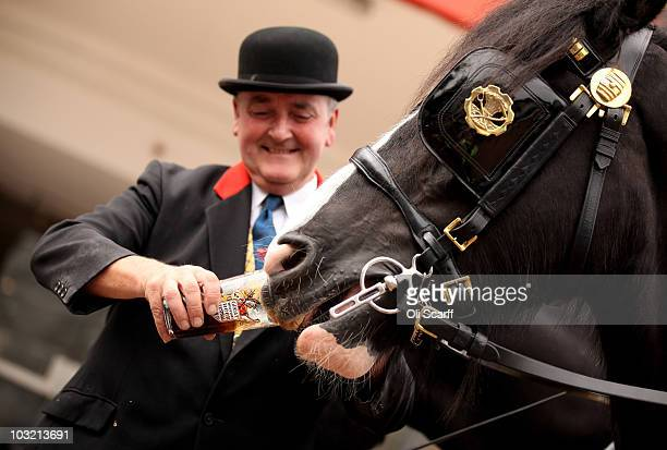 Man feeds a shirehorse pulling a Thwaites Ales cart a pint of beer outside the 'Great British Beer Festival 2010' in Earls Court exhibition centre on...
