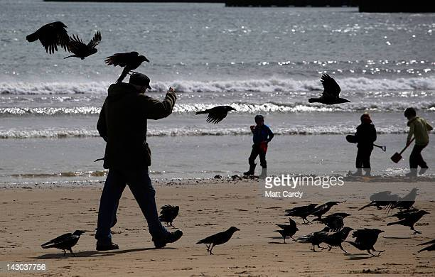 A man feeds birds as he walks along the seafront of Weymouth Bay which will be the venue for the London 2012 Olympic and Paralympic Sailing...
