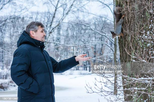 man feeds curious squirrel from his hand in winter snowy park. winter color of animal. - 1 minute 50 ストックフォトと画像