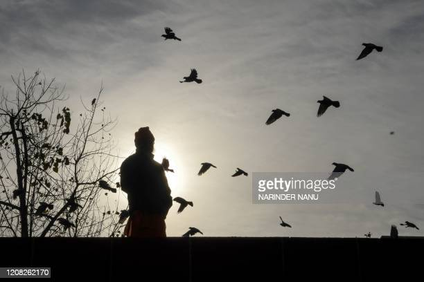 Man feeds pigeons during a government-imposed nationwide lockdown as a preventive measure against the COVID-19 coronavirus in Amritsar on March 26,...