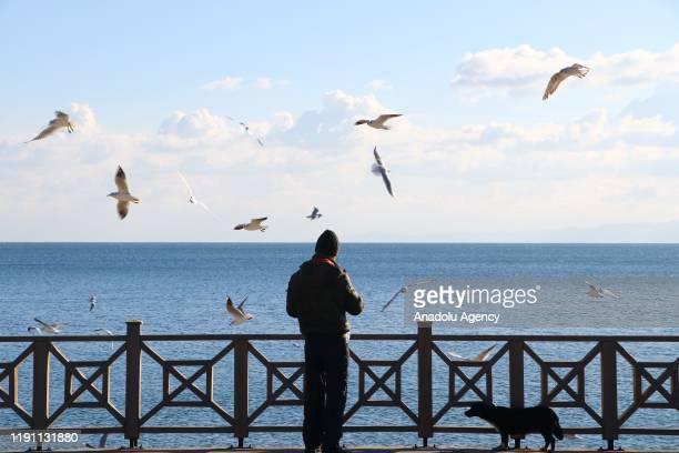 Man feeds seagulls as they fly over the sea during winter season in Tekirdag, Turkey on January 01, 2020.