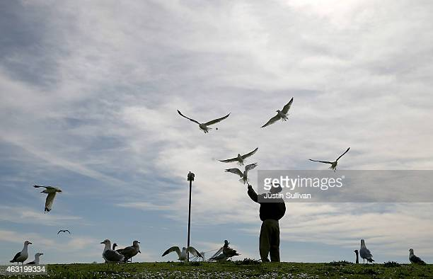A man feeds seagulls at Port View Park on February 11 2015 in Oakland California The San Francisco Bay Area is experiencing a warming trend with...
